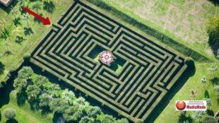 Founders Path Maze